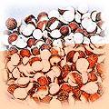 food-nuts-fox.jpg (9525 bytes)